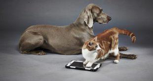 Riconoscere un razza di cane o gatto: semplice come scattare un foto, con Google Lens