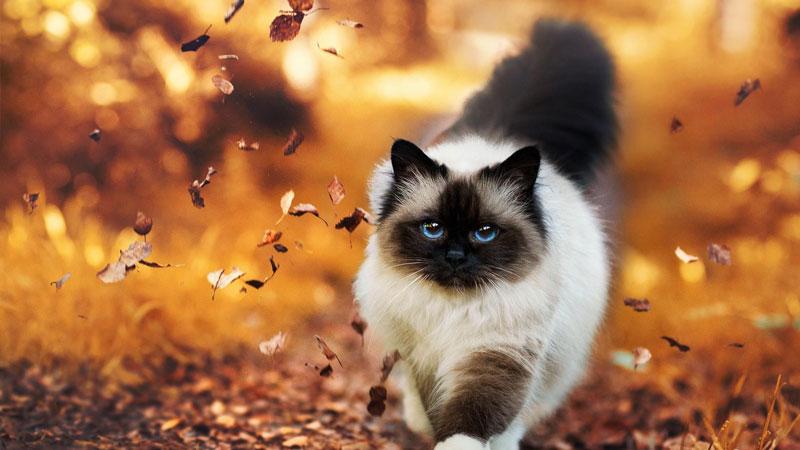 Quale gatto scegliere? Una guida dei caratteri principali delle razze