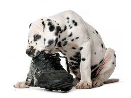 I 4 problemi comportamentali più comuni nei cani