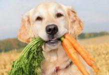 Un cane può essere vegano?